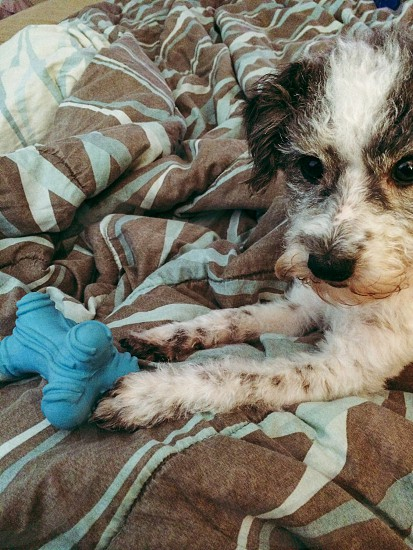 Small dog with toy photo