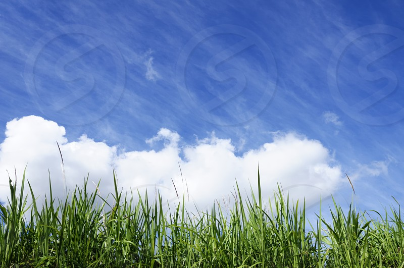 Green grass against clouds and blue sky. photo