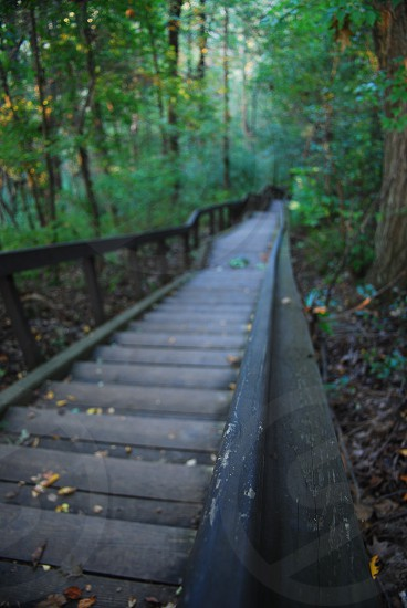 stairs woods wood  photo