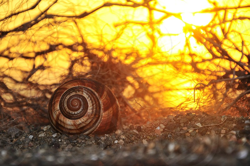 Brown Snail on Soil Under Sun photo