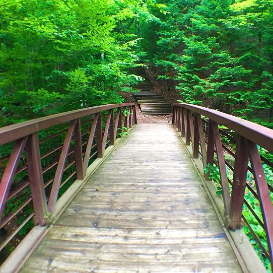 brown steel footbridge beside green leafed tree photo