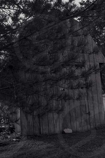 Old Shed covered with a tree. photo