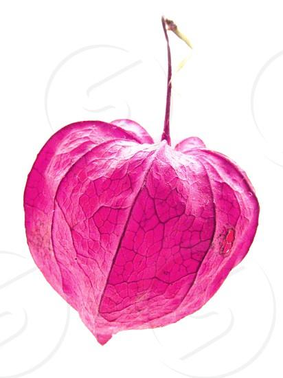 """""""Heart""""... photo"""