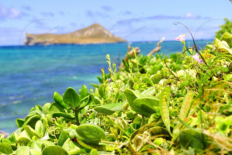 green plant and sea photo