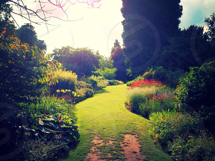 Spring garden England green sunshine photo