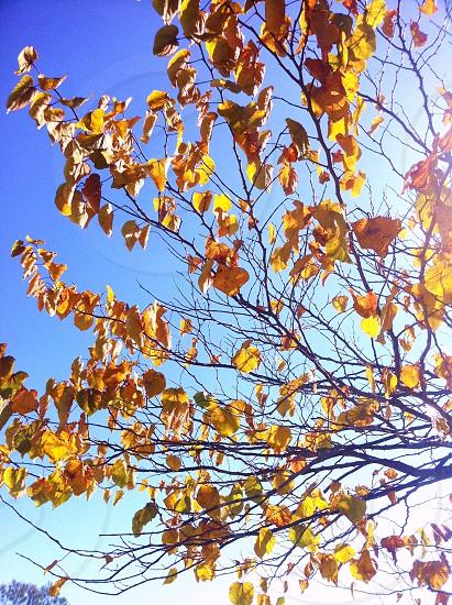 California Fall photo