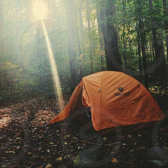 orange marmot tent on forest with sun lights rays photo