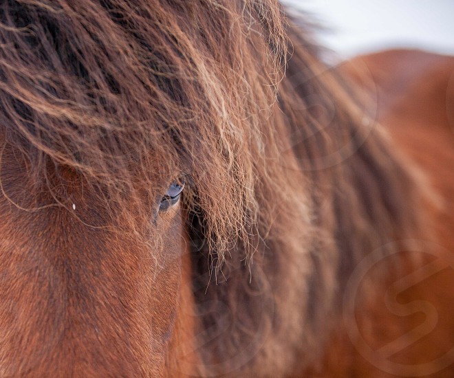close-up photo of brown horse photo