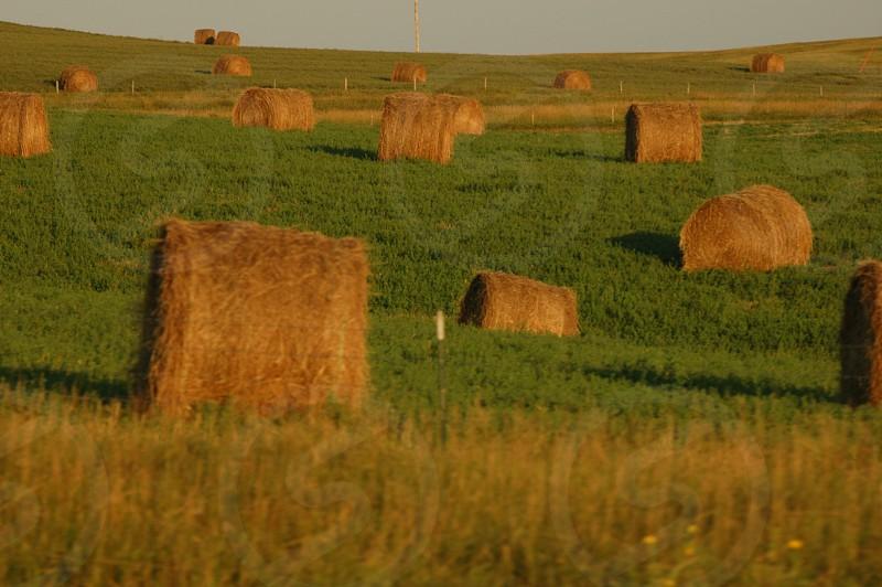 hay field pasture photo