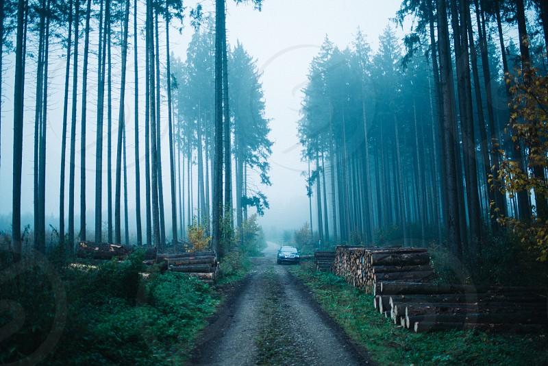 FogwoodforestmistytreesSkymisteriousadventurenaturecarsuvjeepoffroad  photo