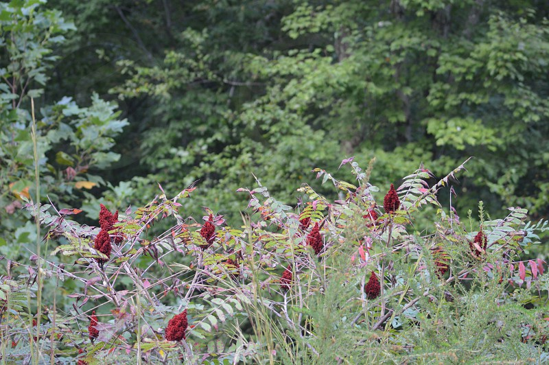 red flowering green fern plant photo