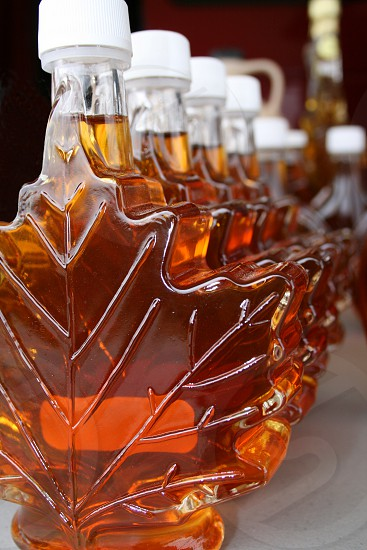 Maple Syrup Line Up. photo