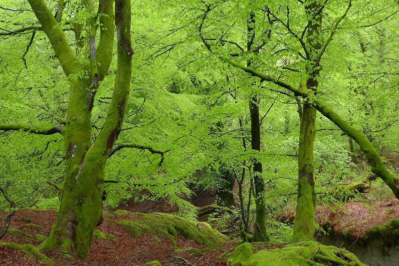Fairy tale greenery photo