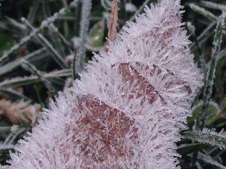 First frost covered leaf photo