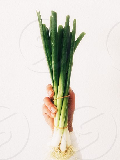 Hand holding green chives photo