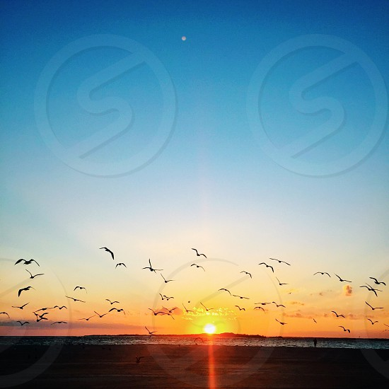 seagulls flying at sunset photo