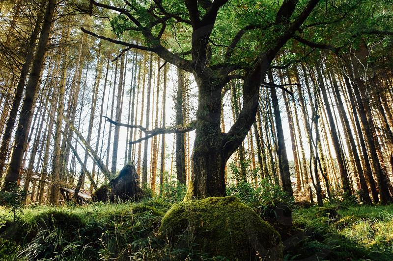 Tree fairy photo