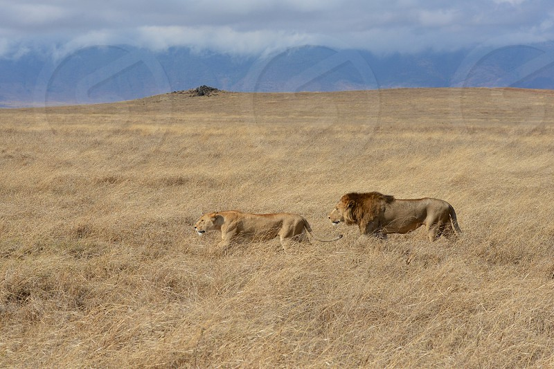 Ngorongoro Crater National Park - Africa photo