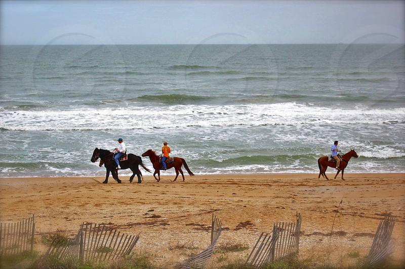 Horses on the beach. photo
