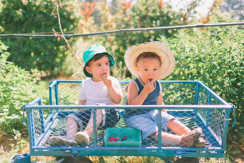 Two boys sitting in a wagon eating berries. photo