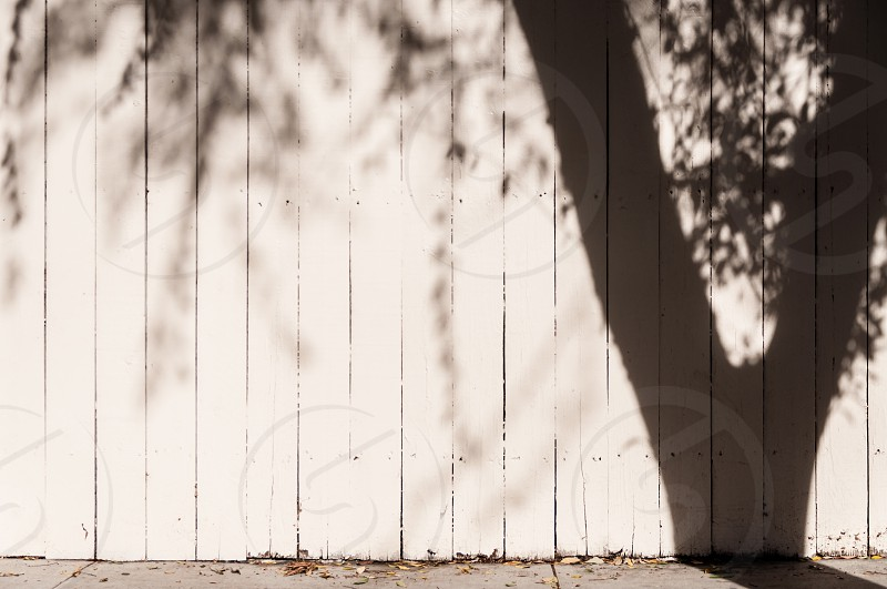 Shadow of tree on fence photo