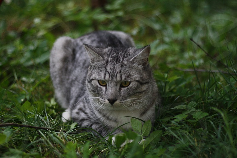 A brooding cat photo