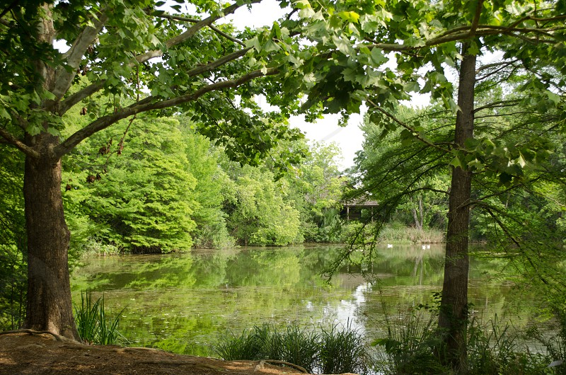 Country pond tank water trees photo