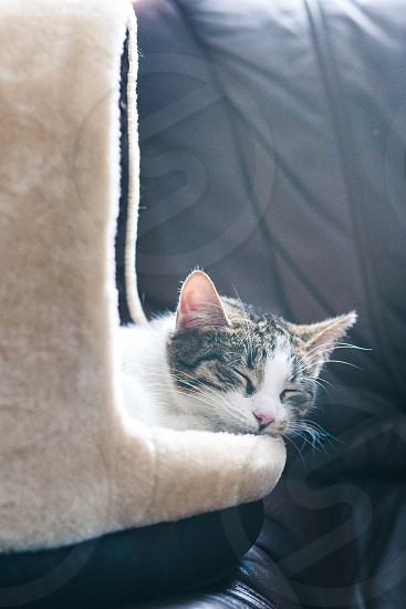 Cat sleeping in a cat bed on a couch photo