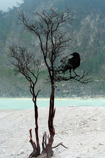 black crow founded on brown dried tree near body of water during daytime photo