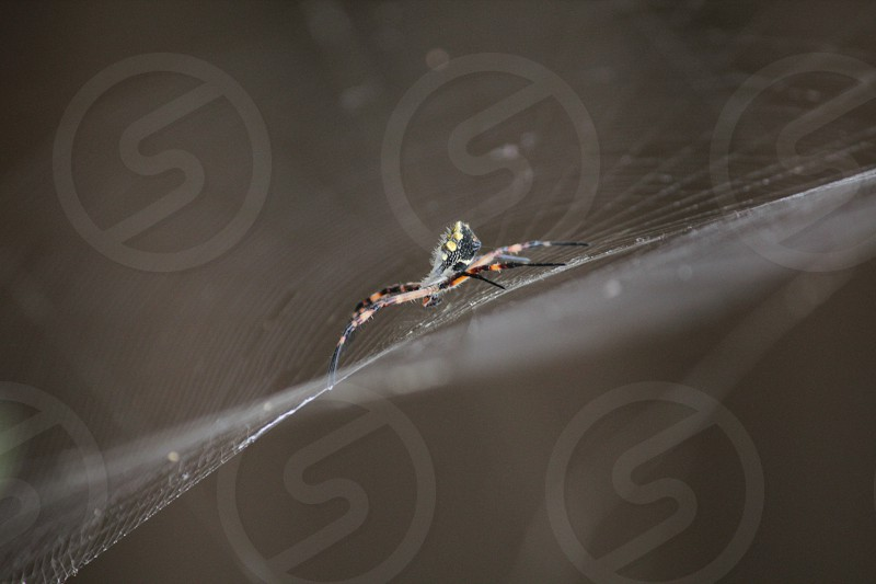 spider web arachnid life orange yellow black  photo