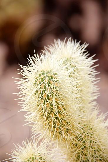 green cactus photo