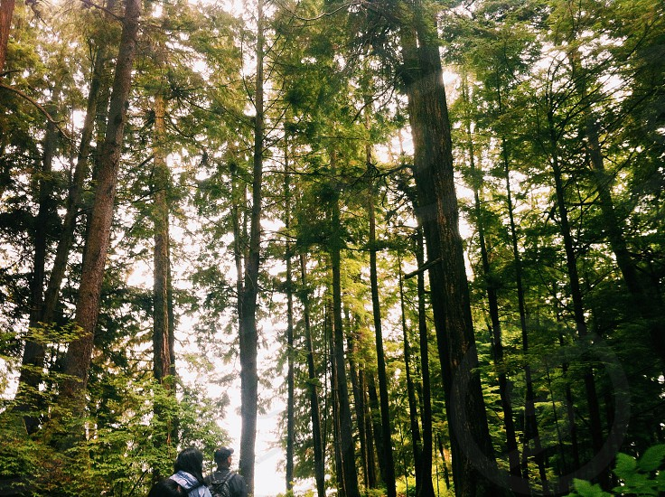 forest with sunrays photograpy  photo