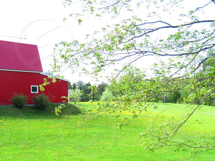 Red barn field trees farm nature landscape summer green grass wild west photo