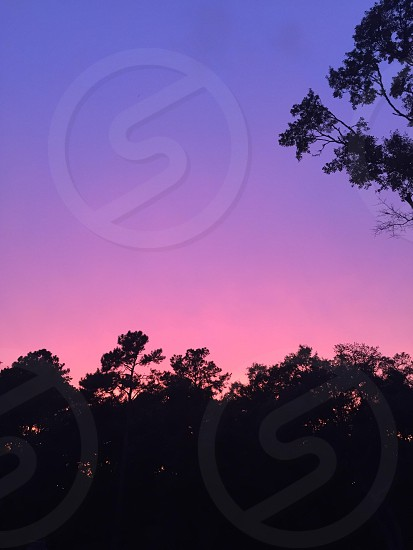 Sunset blue purple pink trees silhouette  photo