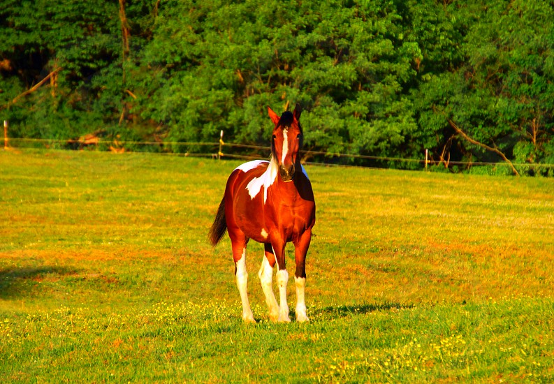 brown and white stallion horse standing on grass field photo