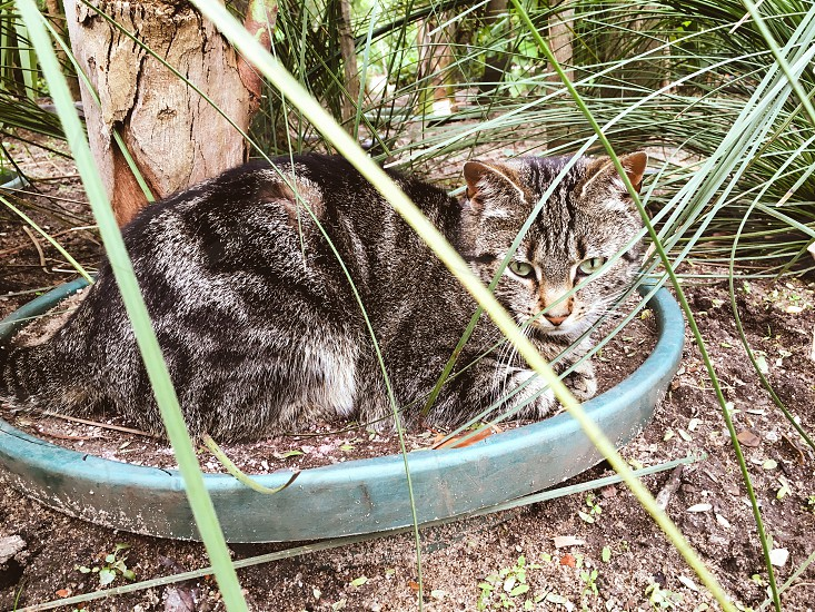 Cat relaxing at the garden photo