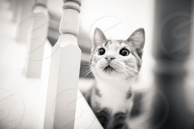 The pets in our lives. Family creature baby fuzzy little friend kitten cat feline stairs. photo
