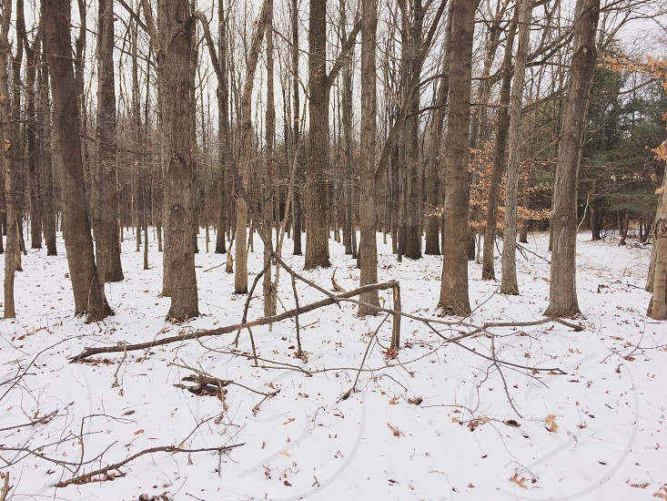 In the woods at Mendon Ponds in Upstate NY.  photo