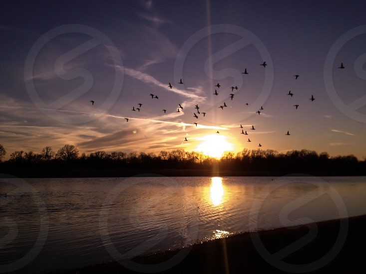 lake and bird flying view photo