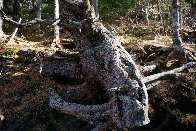 gray tree truck on mossy terrain closeup photo photo