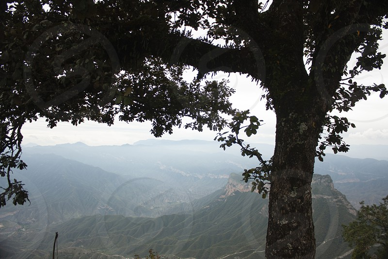 Tree trunk with lichen and leaves in the background scene of Cuatro Palos Sierra Gorda in Mexico fog between the mountains photo
