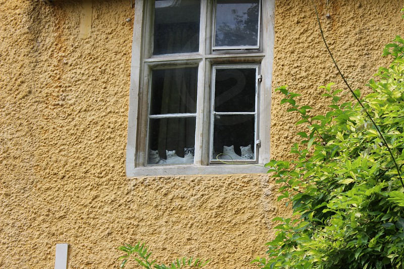 Cats in Window photo