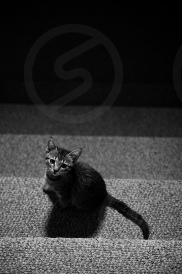 A young kitten on the stairs photo