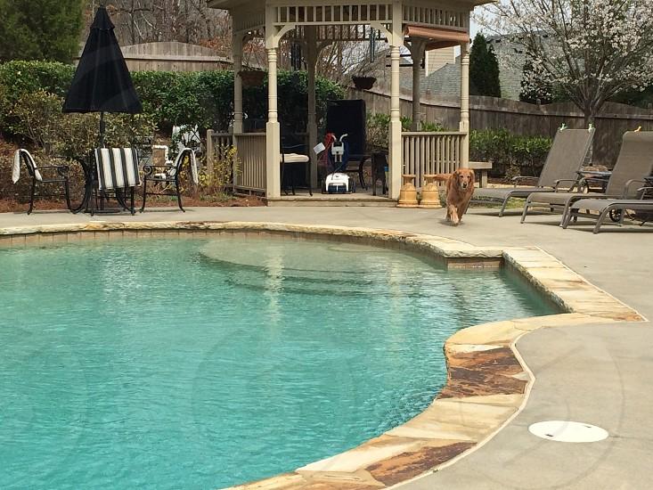 dog running pool outside photo