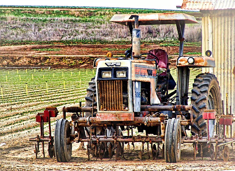 Farm Tractor in the foreground is parked next to a field of crops photo