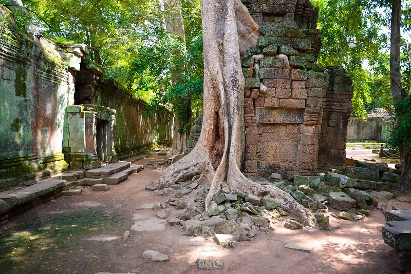 green tree ruins root building forest mystery Angkor Wat photo
