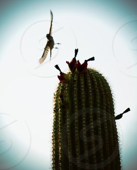 brids on green cactus photo