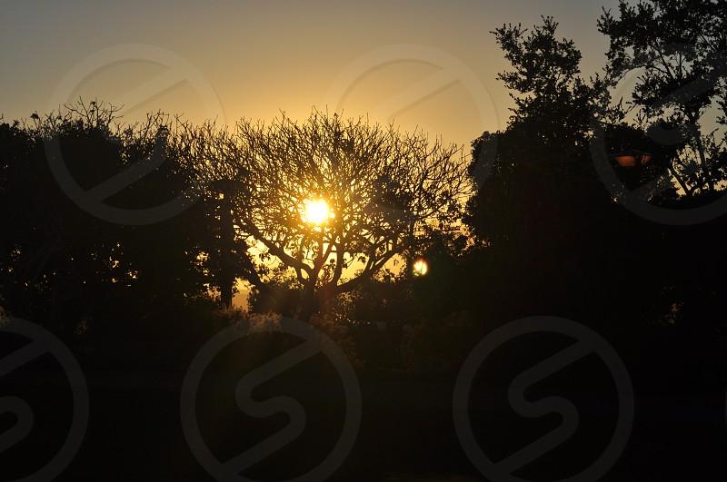 Tree of Light  photo