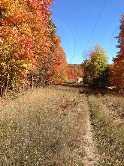 Autumn trail run photo