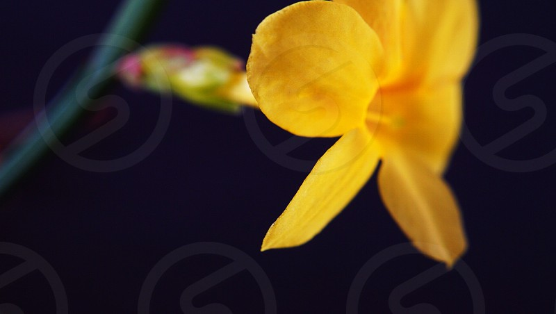 yellow petaled flower in bloom photo